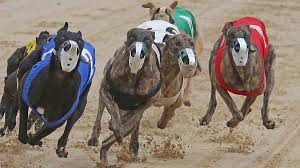 Make Money on Greyhound